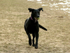 hundewiederfit2
