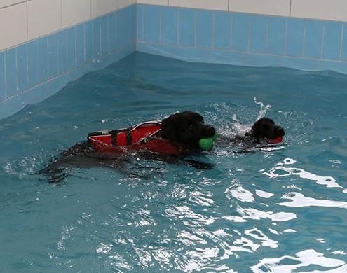 Geschwommen wird in einem beheizten Pool, bei einer Wassertemperatur zwischen 26 und 28 Grad, das ganze Jahr über.  Der Hund trägt für das Schwimmen eine Schwimmweste für eine bessere Lage im Wasser.  Der Körper des Hundes ist im Wasser praktisch schwerelos. (Das Eigengewicht verringert sich um bis zu 90 %). Der Auftrieb im Pool bewirkt vor allem eine mechanische Entlastung der Extremitäten. Bälle oder andere Spielzeuge werden zur Motivation genutzt.